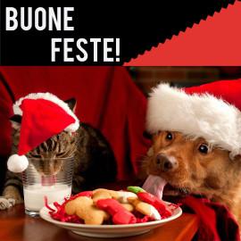 news buone feste
